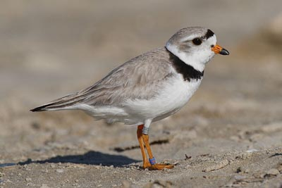 plover, cape cod, beaches